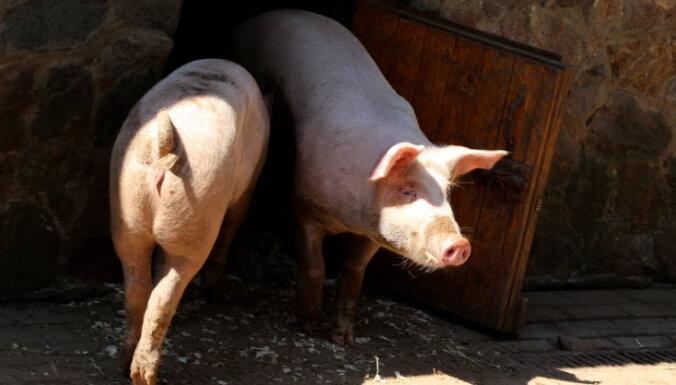 В Эстонии, Литве и Польше зарегистрирована вспышка АЧС у домашних свиней