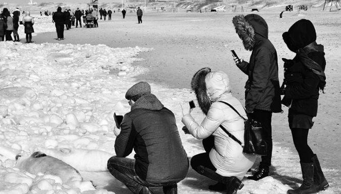 """""""На десяток бельков две сотни людей с телефонами"""". На пляже в Вентспилсе будет дежурить полиция"""