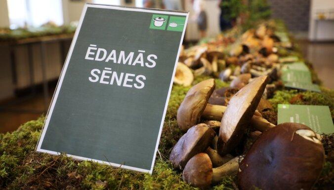 Latvijas Dabas muzejā 9. septembrī atklās sēņu izstādi