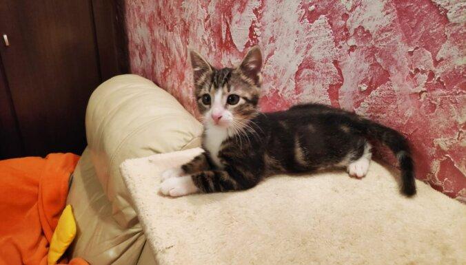 Adoptētā kaķēna Pīka saimniece: Mums viņš ir vislabākais