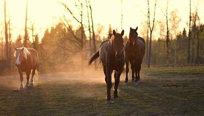 Zirgu izjādes, melnā pirts vai pārgājiens – dabai draudzīga atpūta Krāslavas novadā