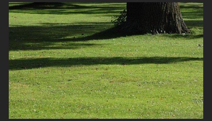 Kā veiksmīgi iekļaut dārza ainavā lielos kokus?