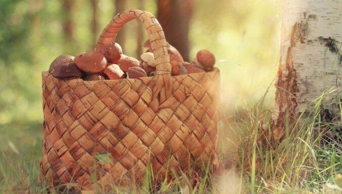 Pieci īpaši vitamīniem bagāti produkti, kas bērniem būtu jāēd rudenī