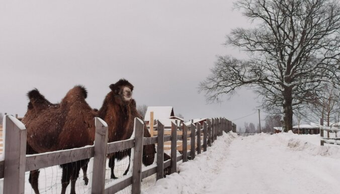 Izbaudi ziemu Ziemeļlatgalē: kādu piedāvājumu šogad izveidojuši tūrisma speciālisti