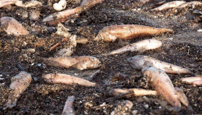 ФОТО: Лиепайский пляж усеян мертвой рыбой
