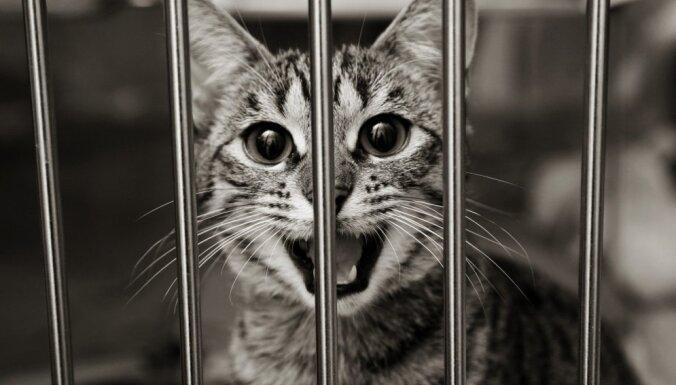 Patversmei 'Labās mājas' pārmet kaķu iemidzināšanu; darbinieki pauž – tā ir smaga nasta
