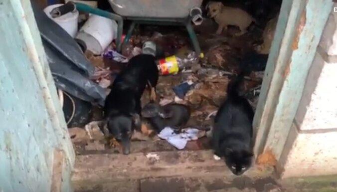 Aizdomas par suņu zagšanu Cēres pagastā; PVD meklē dzīvnieku īpašniekus