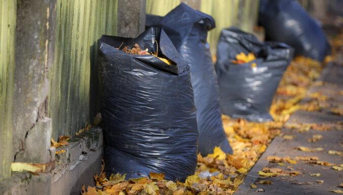 Что не так со сбором листьев? И почему отказ от пакетов поможет сэкономить