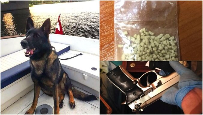 Notver Pļavnieku narkotirgoni; suns Vatsons atrod narkotiku slēptuves