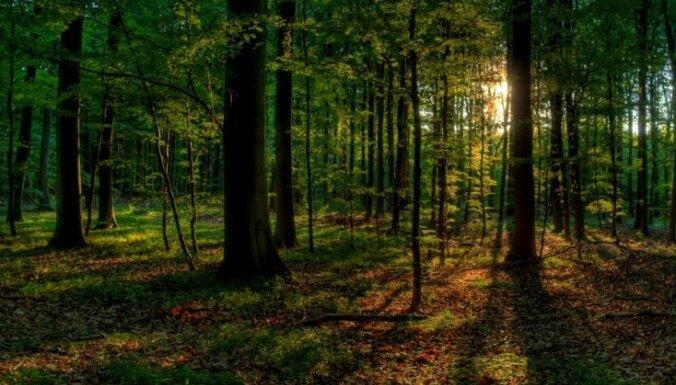Balvu novadā mežā nomaldījusies sieviete