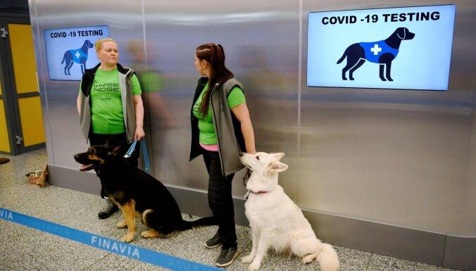 Собаки определяют Covid-19 по запаху. Как этим пользуются в ЕС