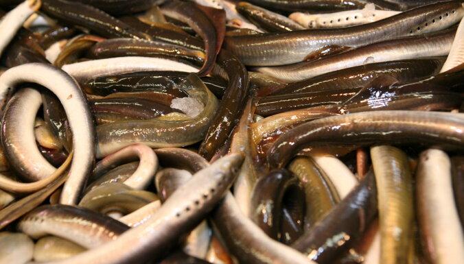 Par nēģu nelikumīgu zvejniecību Ventas rumbā liek atmaksāt vairāk nekā 51 000 eiro