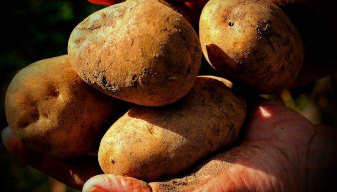 Kartupelis - visatbaidošākais dārzenis?