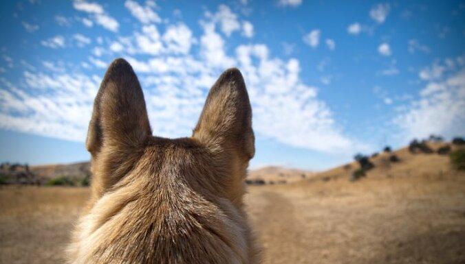 Топ-8 лучших пород собак для тех, кто живет за городом
