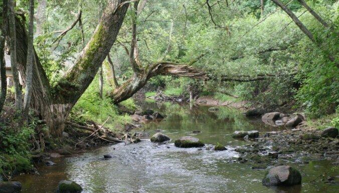 Par 2021. gada dzīvotni pasludinātas upju straujteces un dabiski upju posmi