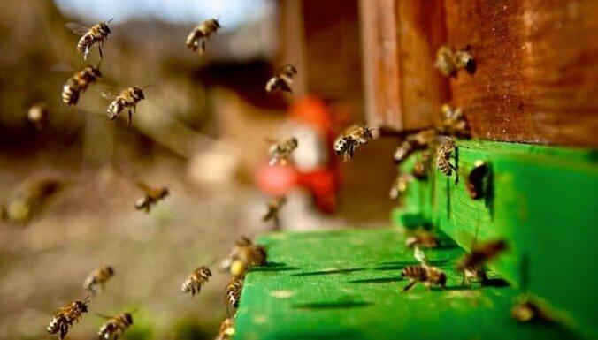 Ученые: пчелы способны обучаться счету