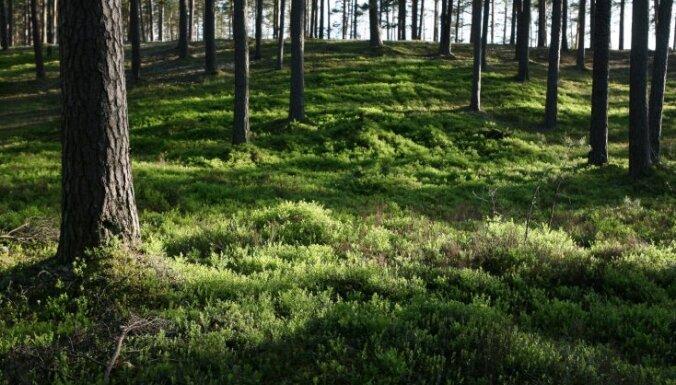 Privātie īpašnieki sāk izrādīt interesi par iespēju pārdot savus mežus LVM