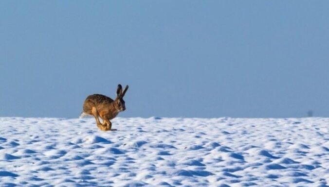 В Латвии наименьшая толщина снежного покрова в Балтии
