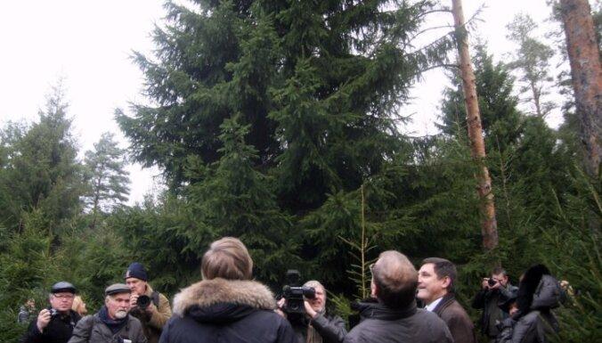 Самая высокая елка Риги — на набережной 11 Ноября