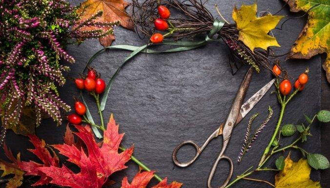 Kādus dabas materiālus ievākt rudens sezonā, lai tos izmantotu floristikā?