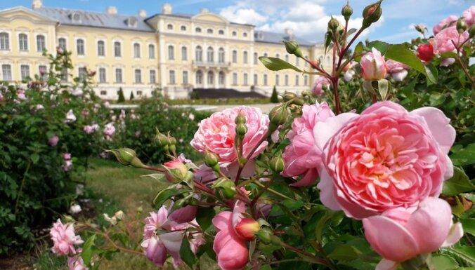 ФОТО. В Рундальском замке расцвели розы (и ехать туда надо прямо сейчас)