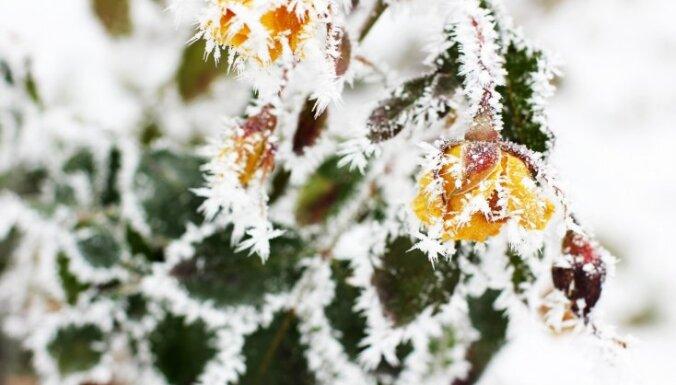 Вечером местами похолодает до -15 градусов, в понедельник ожидаются снег и дождь