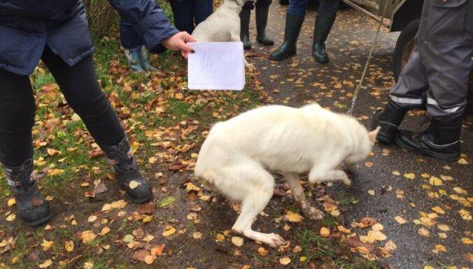 """ФОТО: Из """"Парка хаски"""" под Вентспилсом за серьезные нарушения изъяли 26 собак"""