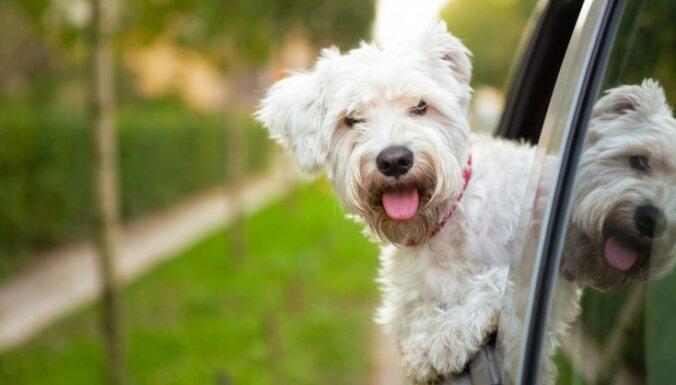 15 suņu šķirnes, kuras ir piemērotas ceļotājiem