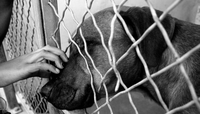5 мифов про животных из приюта
