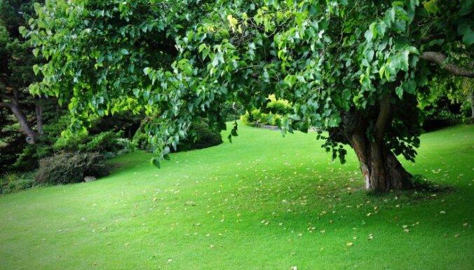 Koki teritorijas ierobežošanai un pagalma dailei – dārzkopja ieteikumi nekļūdīgai izvēlei