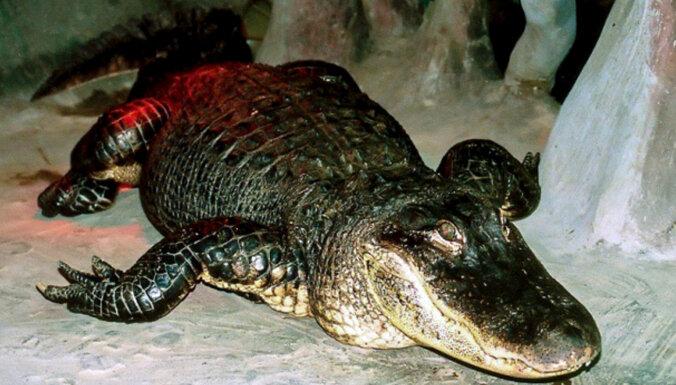 Maskavā mūžībā devies par Hitlera mīļdzīvnieku dēvētais aligators Saturns