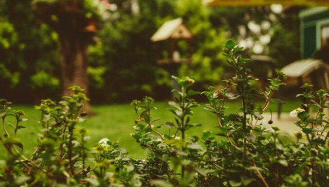 Зеленый щит: 19 растений, которые отпугивают насекомых и вредителей