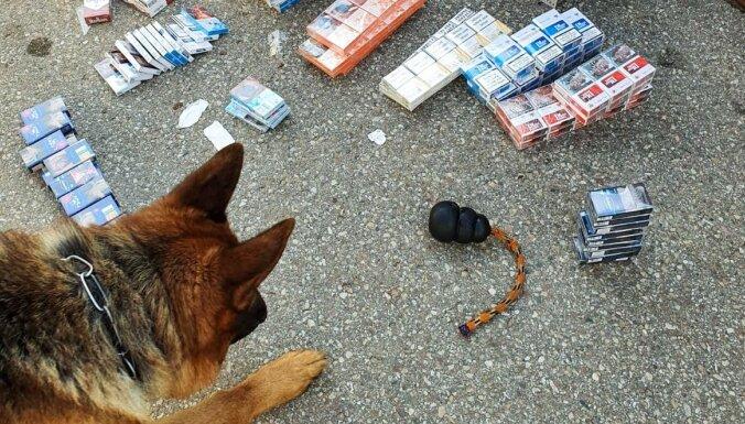 ФОТО: Служебная овчарка Дарвин нашла в Даугавпилсе склад нелегальных сигарет