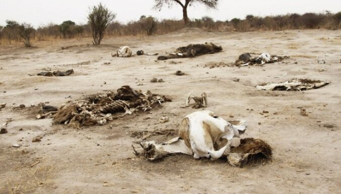 Malumednieku saindēta ziloņa dēļ bojā iet lauvas un 100 maitu lijas