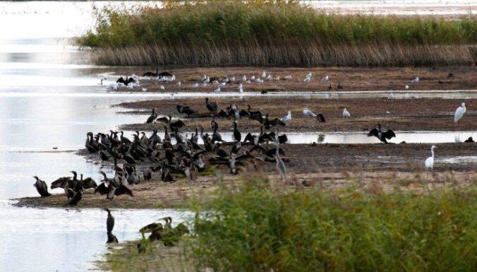 Aizvien populārāka kļūst putnu vērošana