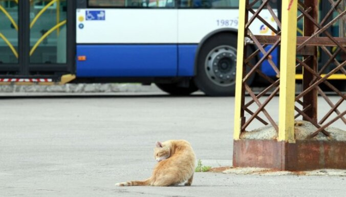 Из-за упавшего столба был изменен маршрут троллейбуса №1