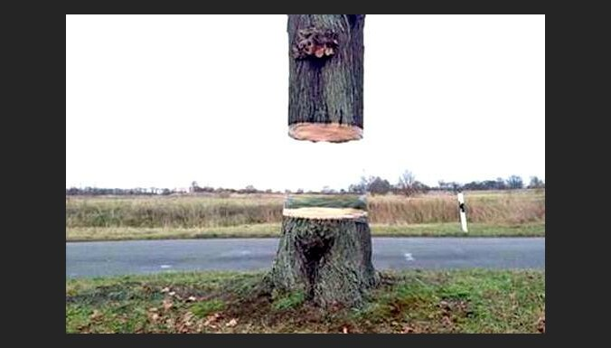 Mākslas projekts: Vācijā radīta optiskā ilūzija - lidojošs koks