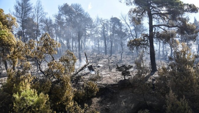 В Греции из-за жары объявлен высший уровень пожарной опасности