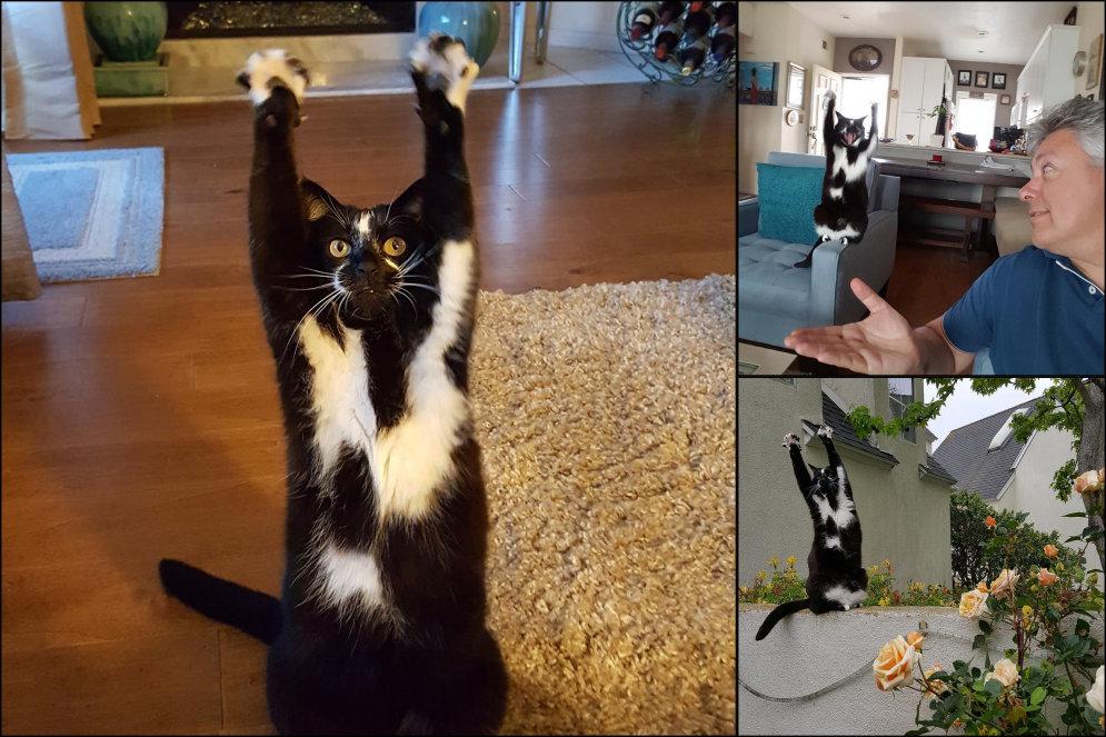Эта кошка все время поднимает лапы вверх, и никто не знает — почему