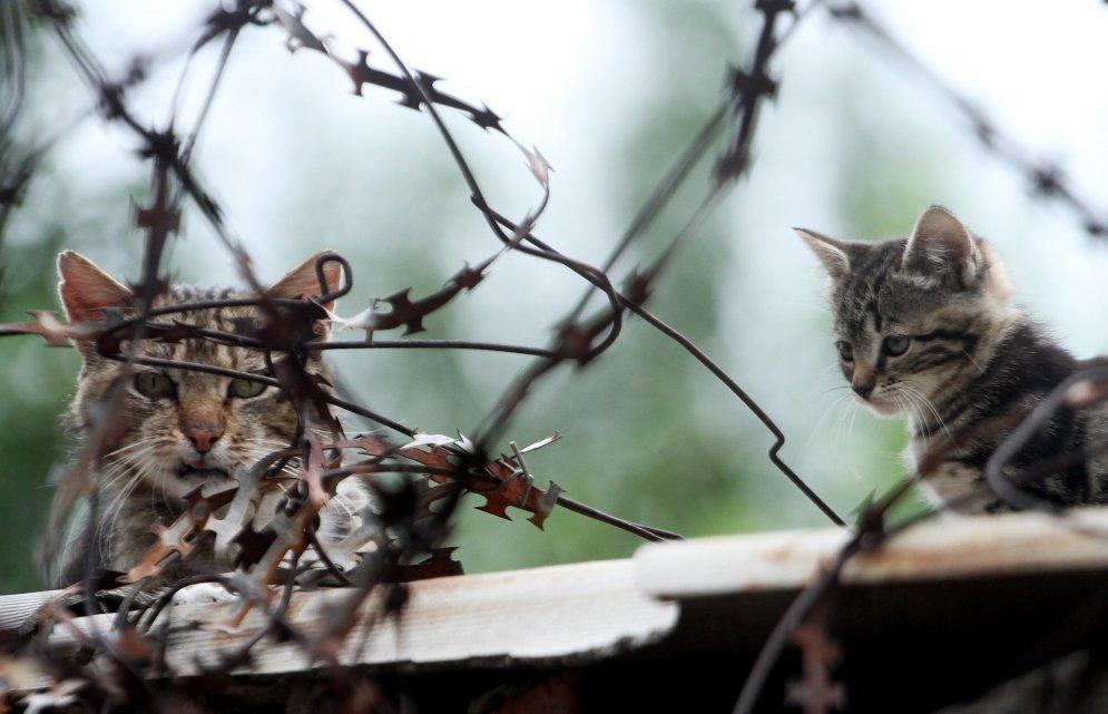 Kaķu dzīve Ukrainas karā