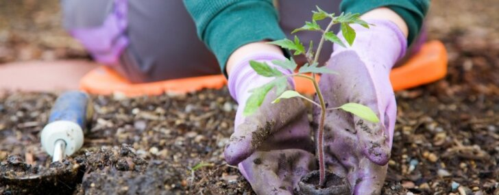 Kas jāizdara dārzā līdz 7. maijam