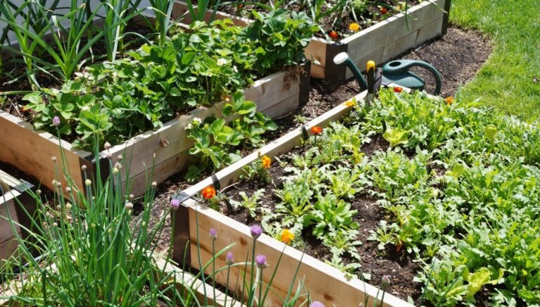 Padomi, kā izveidot un iekārtot dārzu vienā kvadrātmetrā