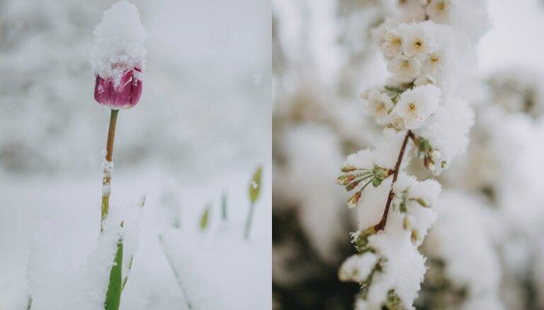 Sniegs maijā – atsūti ziemīgā pavasara ainavas 'Delfi Aculieciniekam'