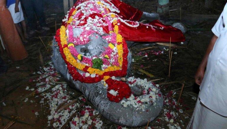 Indijā 88 gadu vecumā miris vecākais zināmais nebrīvē augušais zilonis
