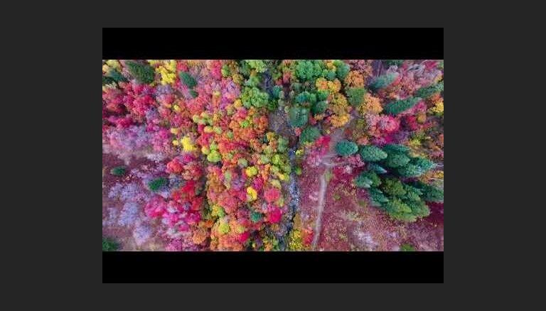 ВИДЕО. Снятый на видео в США аномальный лес шокировал путешественников