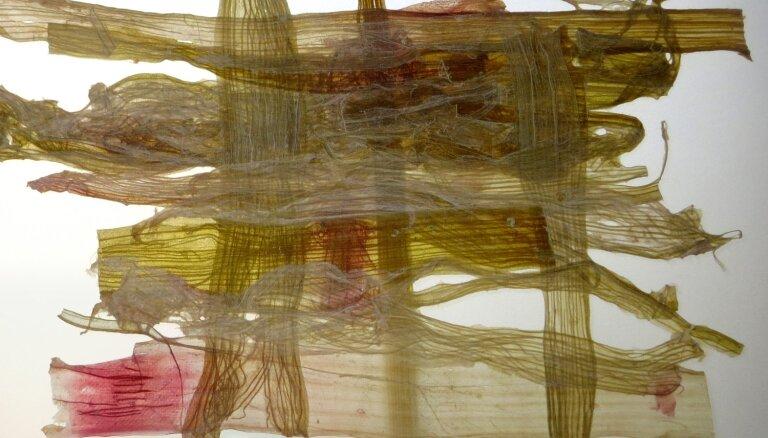 Galerijā 'Istaba' atklās Ērikas Zuteres izstādi 'Šķērsgriezums'