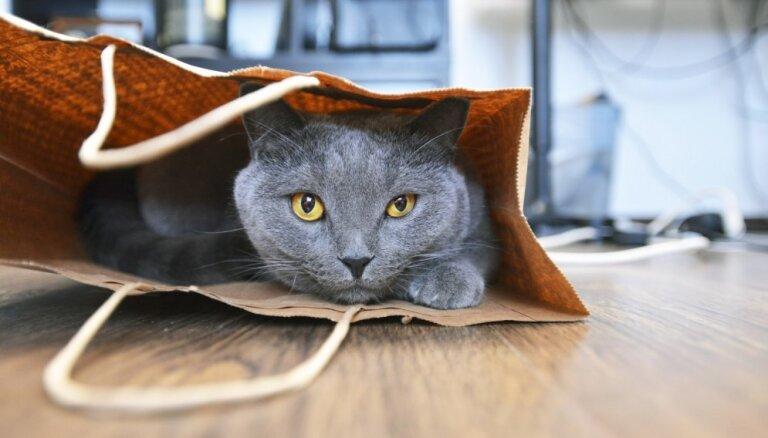 ВИДЕО: Кошка отморозила все лапки, но получила бионические протезы и снова может ходить