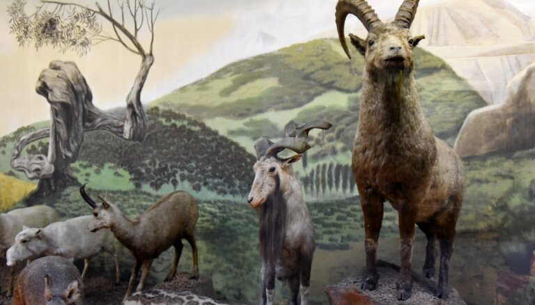 Nacionālais dabas muzejs veidos aplikāciju – ceļvedi ieskatam muzeja ekspozīcijās