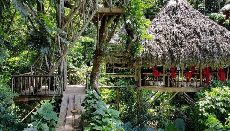 Ciemats Dominikānas Republikas džungļos, kurā mājas ir koku galotnēs