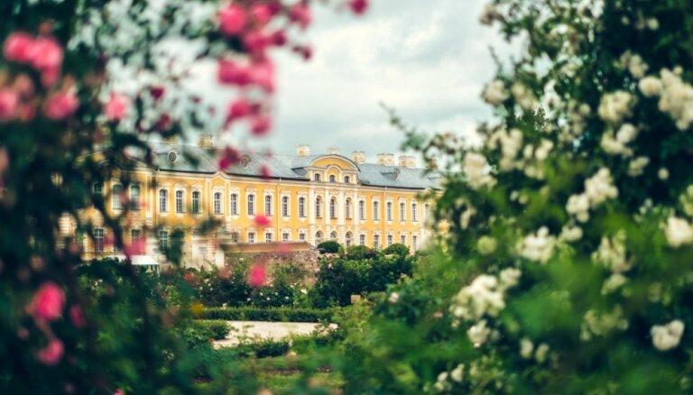 Foto: Majestātisko rožu ziedēšana Rundāles pils parkā